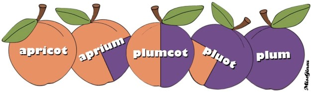 A Rough Guide to Apricot/Plum Hybrids.
